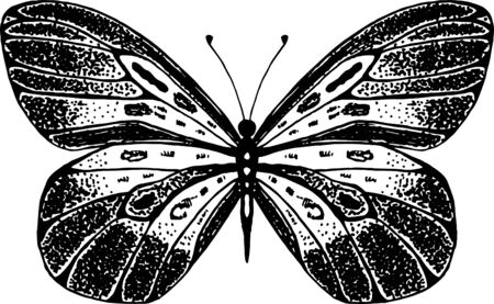 Vector illustration of winged insects. Hand drawn butterfly. Entomology sketch isolated on white. Black and white line art for packaging, label, icon. Illusztráció