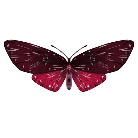 Illustration of butterfly in burgundy color. Single insect with wings isolated on white. Fauna element for packaging, label, design. Symbol of summer and beauty.