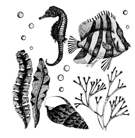 Vector illustration of seahorse, fish, seaweed, shell. Hand drawn ocean fauna. Detailed sketch isolated on white. Wildlife elements for packaging, logo, label, icon.