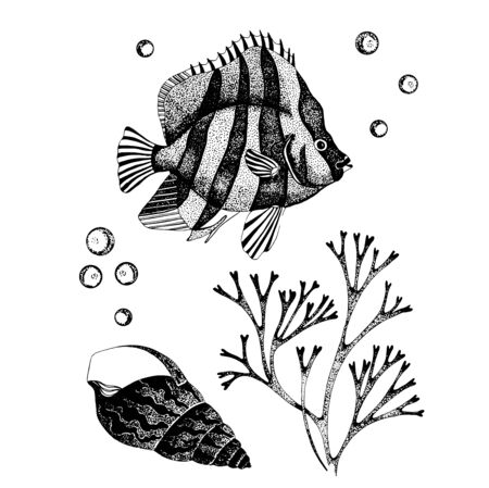 Vector illustration of underwater. Hand drawn ocean fauna. Detailed sketch of fish, shell anf seaweed isolated on white. Sea wildlife elements for packaging, logo, label, icon.