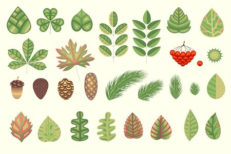 pinecone: A natural herbal collection for your creativity. Stylized leaves, plant elements. Vector illustration