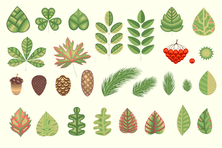 A natural herbal collection for your creativity. Stylized leaves, plant elements. Vector illustration