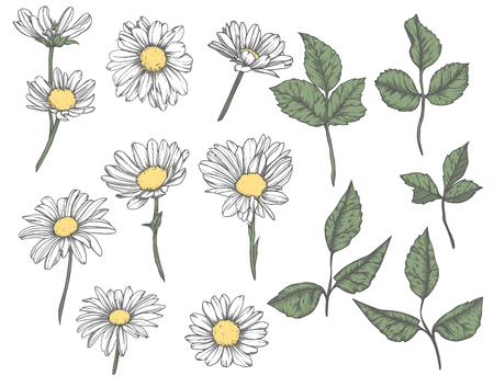 Set of hand-drawn  floral elements in sketch style. Vintage Vector illustration Illustration