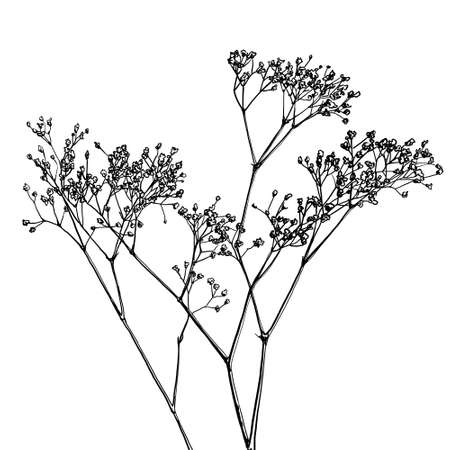 baby's breath flower, gypsophila vector drawing, coloring book, tattoo idea Vecteurs