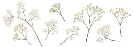 babys breath flower, gypsophila hand drawn, isolated vector illustration set. coloured. Invitations, gift card, wedding, greetings, anniversary decorations. Bouquet element. Green, ivory, beige