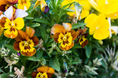 Yellow Flower Stock fotó