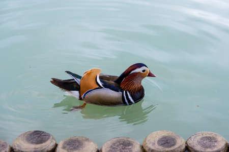 Duck Stock fotó