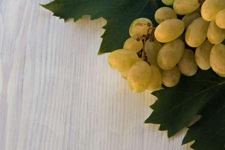 tannins: Malvasia grape
