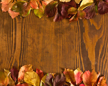 the thicket: leaves of thicket creeper over wood background