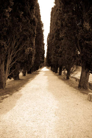 cypress: avenue of Cypress trees in Aquileia, Italy Stock Photo