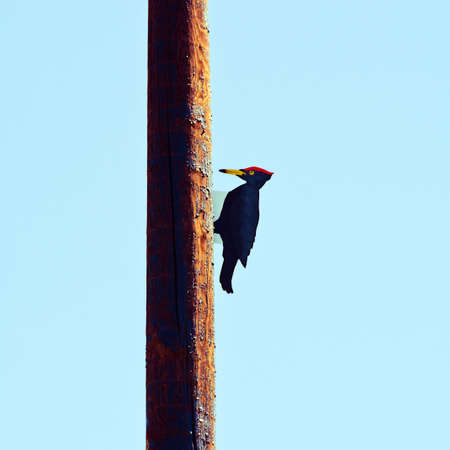 Wooden sculptures of woodpecker on a pole