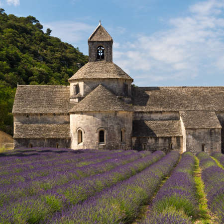 Senanque Abbey and lavender field , Provence, France