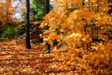 folliage: fall folliage in Quebec, canada Stock Photo