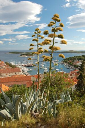 starigrad: Hvar Stock Photo