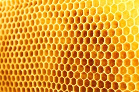 Honeycomb photo