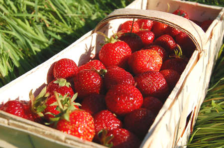 pedicel: Fresh tasty strawberries in a punnet on the grass