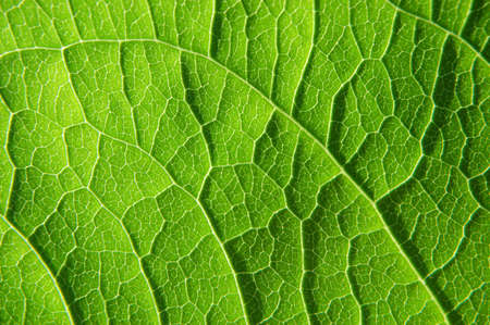 clean artery: closeup of a leaf