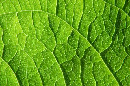 clean artery: closeup of a leaf