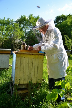 Experienced senior beekeeper working in his apiary in the springtime Stock Photo - 19786940