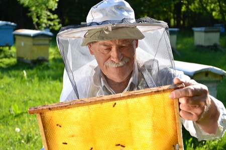 Experienced senior beekeeper working in his apiary in the springtime Stock Photo - 19786939