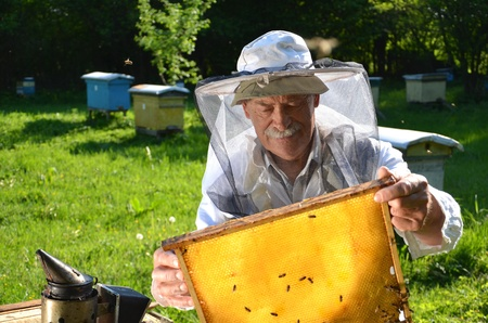 Experienced senior beekeeper working in his apiary in the springtime Stock Photo - 19786928