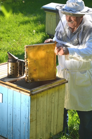 Experienced senior beekeeper working in his apiary in the springtime Stock Photo - 19786925