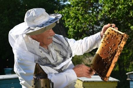 Erfahrene Senior Imker arbeitet in seinem Bienenhaus im Fr?hling