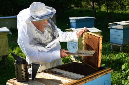 Esperto apicoltore anziano che lavora nel suo apiario in primavera Archivio Fotografico