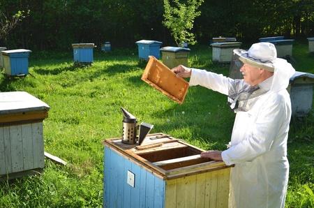 Experienced senior beekeeper working in his apiary in the springtime Stock Photo - 19786950