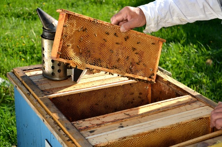 Experienced senior beekeeper working in his apiary in the springtime Stock Photo - 19786946