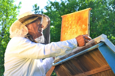 Experienced senior beekeeper working in his apiary in the springtime Stock Photo - 19786919