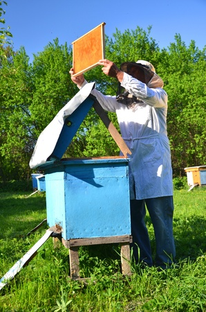 Experienced senior beekeeper working in his apiary in the springtime Stock Photo - 19786930