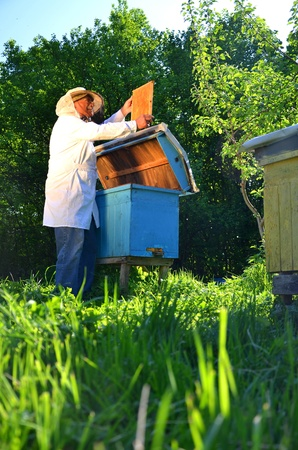 Experienced senior beekeeper working in his apiary in the springtime Stock Photo - 19786951