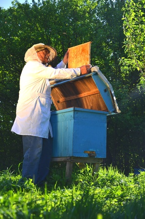Experienced senior beekeeper working in his apiary in the springtime Stock Photo - 19786936