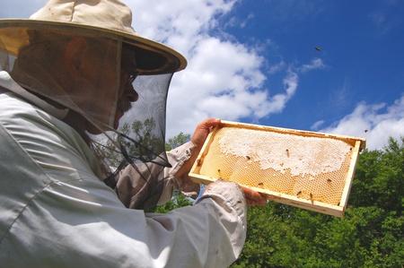 Esperto apicoltore anziano che lavora nel suo apiario