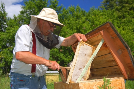 Experienced senior beekeeper working in his apiary Stock Photo - 19787001
