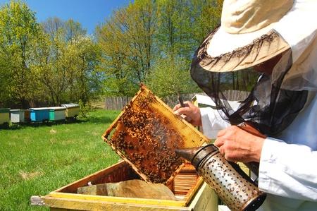 miel de abeja: Apicultor superior con experiencia de trabajo en su apiario Foto de archivo