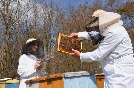 apiary: two beekeepers in apiary Stock Photo