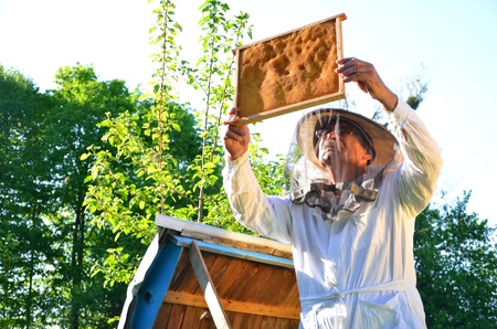 apiary: Experienced senior beekeeper working in his apiary in the springtime Stock Photo