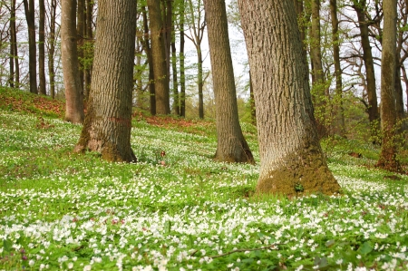 Forest in the springtime photo