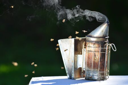 蜂の喫煙者 写真素材
