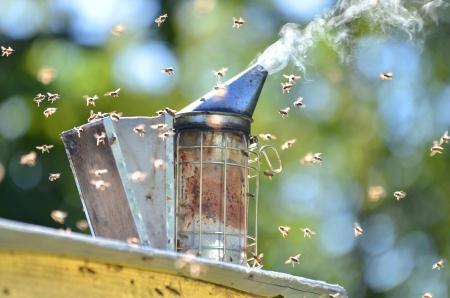 bee smoker 免版税图像