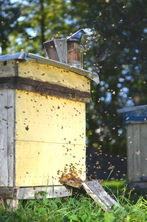 apiary: Beehive in apiary