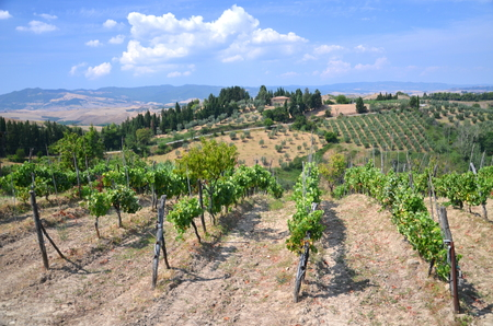 agriturismo: Beautiful picturesque landscape of countyside in Tuscany, Italy