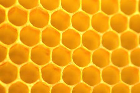 natural honeycomb photo