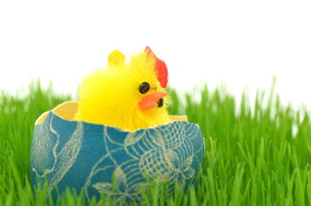 little easter chicken in easter egg on the grass photo