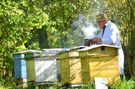 Erfahrene Senior Imker in seinem Bienenhaus Einstellung ein Feuer in einer Biene Raucher