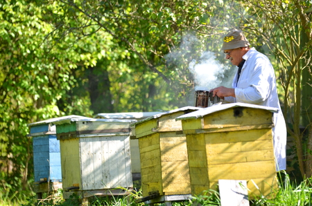 Experienced senior apiarist in his apiary setting a fire in a bee smoker Stock Photo