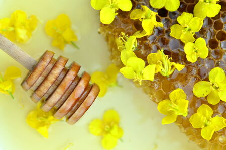 blossom honey: delicious honey, honeycomb, delicate rapeseed flowers and honey dipper Stock Photo