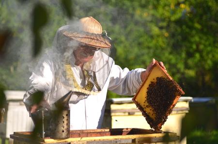 Esperto Senior ispezione making apicoltore in apiario dopo stagione estiva